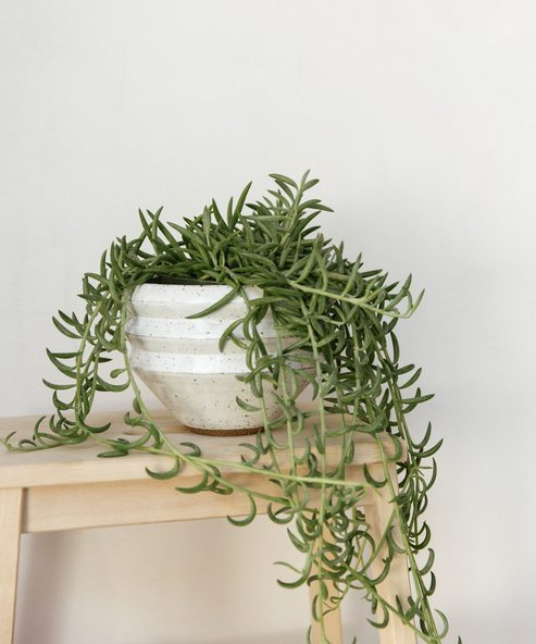 Zig Zag Planter Toasted White